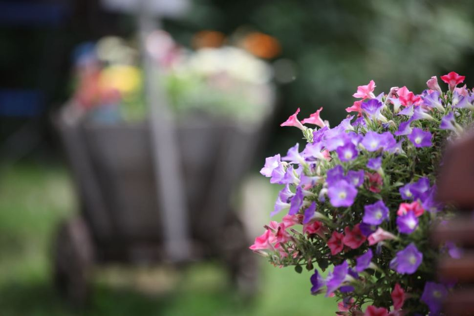 Blütenpracht an lauschigem Örtchen © Henry Böhm